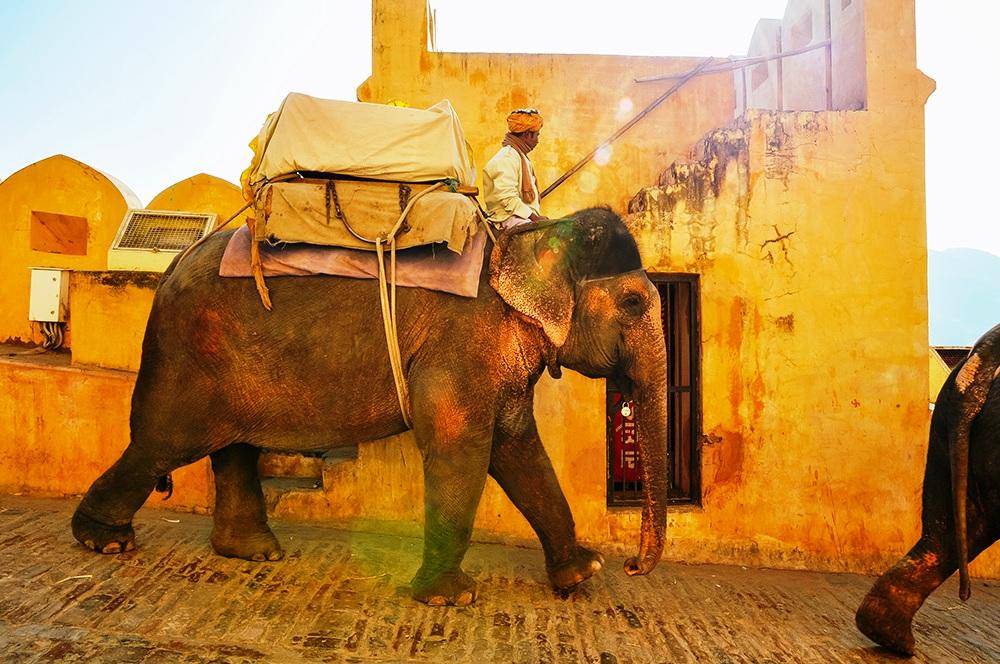 elephant-rajasthan 10 Razones para Viajar a India este 2019