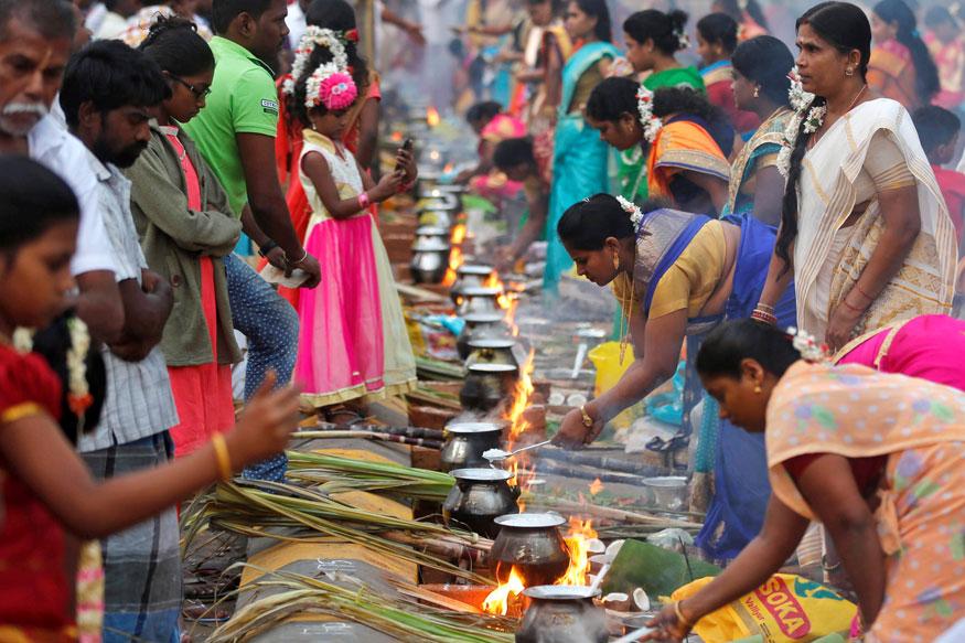 Pongal Festivales más Famosos de la India