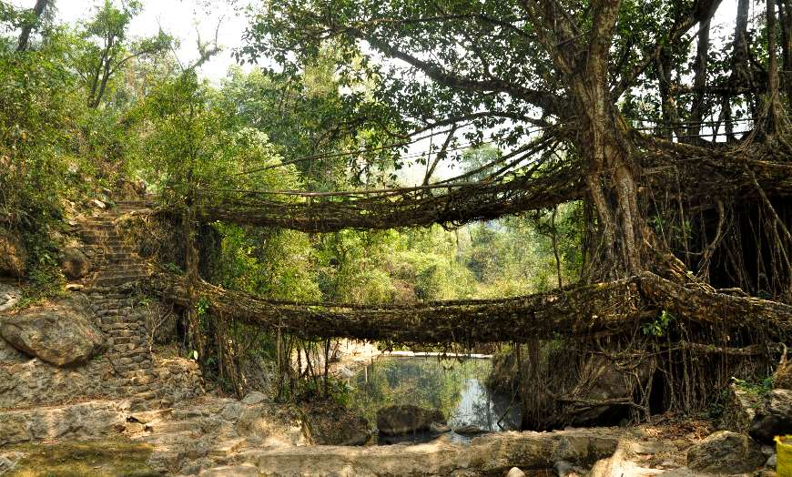SS-Old-Root-Bridge-Cherapunjee-Meghalaya-India 30 increíbles atractivos turísticos de la India