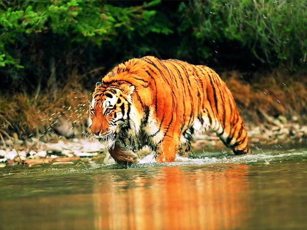 Sunderbans-Bengala-Occidental Los 10 lugares de Patrimonio de la Humanidad en la India
