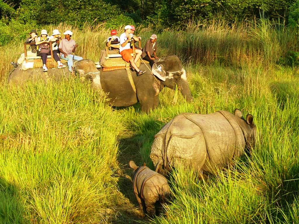 elephant-ride-chitwan 10 cosas únicas que hacer en Nepal
