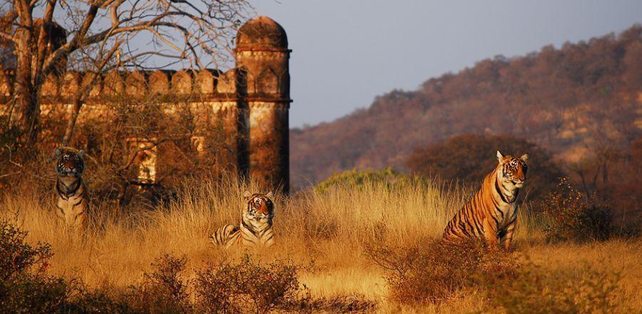 ranthambhore India: Las Mejores 10 Atracciones para Turistas Mexicanos