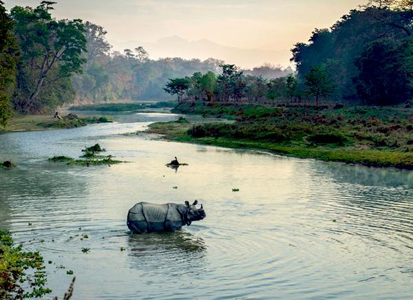 viajar a un parque nacional de chitwan