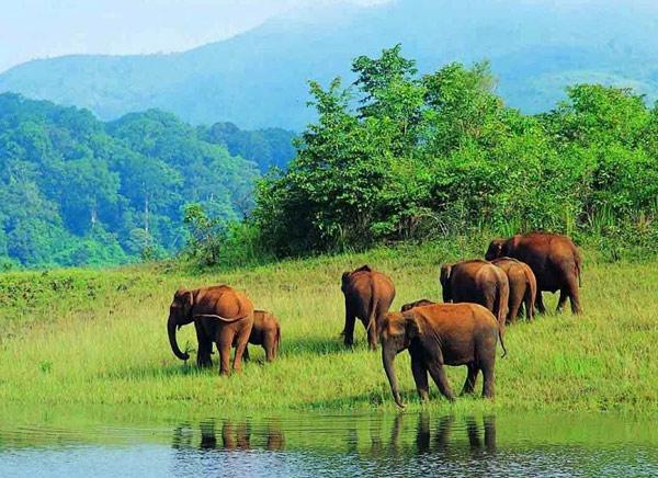 viaje a periyar en el sur de la India gira