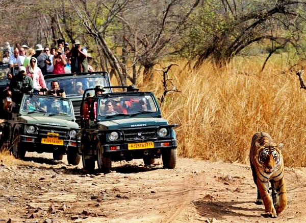 de Viaje a la ciudad de Jaipur, con Tigre