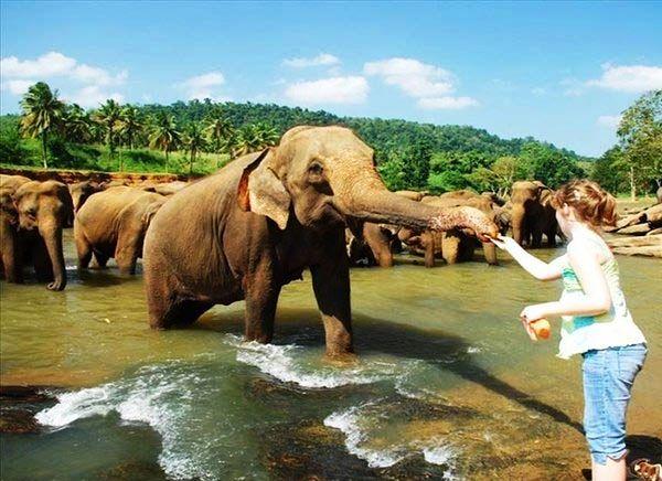 viaje a srilanka